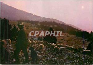 Moderne Karte Les Belles Images de Provence  Berger et son troupeau au coucher du soleil Moutons