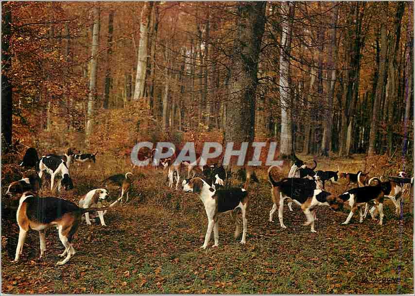 Moderne Karte Paysage de France La Meute en Foret De la depouille de nos bois L'automne avait jonche la terre 0
