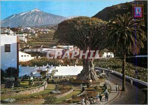 Moderne Karte Icod de Los Vinos Tenerife El Drago millenario