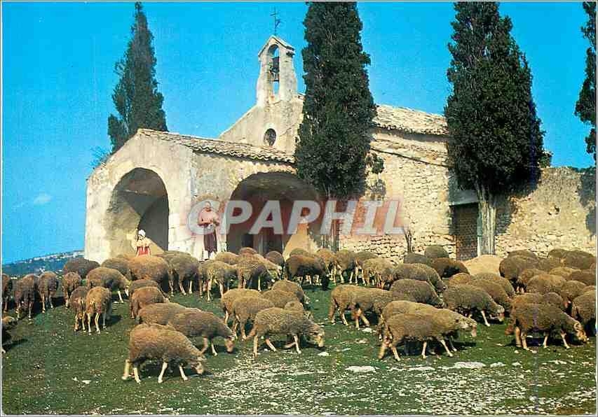Moderne Karte Les Belles Images de Provence Moutons devant la Chapelle St Sixte a Eygalieres Moutons 0