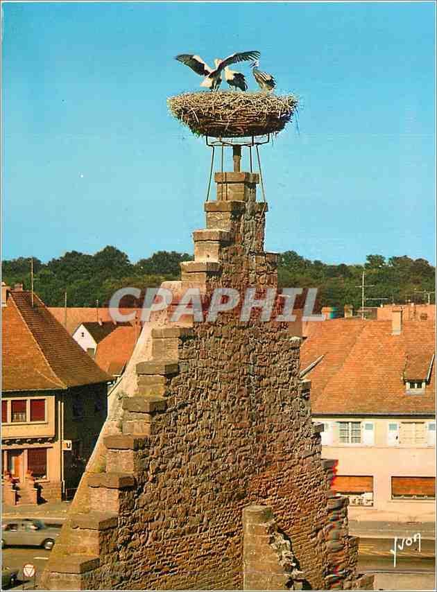 Moderne Karte Couleurs et Lumiere de France L'Alsace Ostheim (Haut Rhin) Nid de Cigognes 0