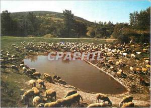 Moderne Karte Le troupeau autour d'une lavogne Moutons En parcourant les Causses