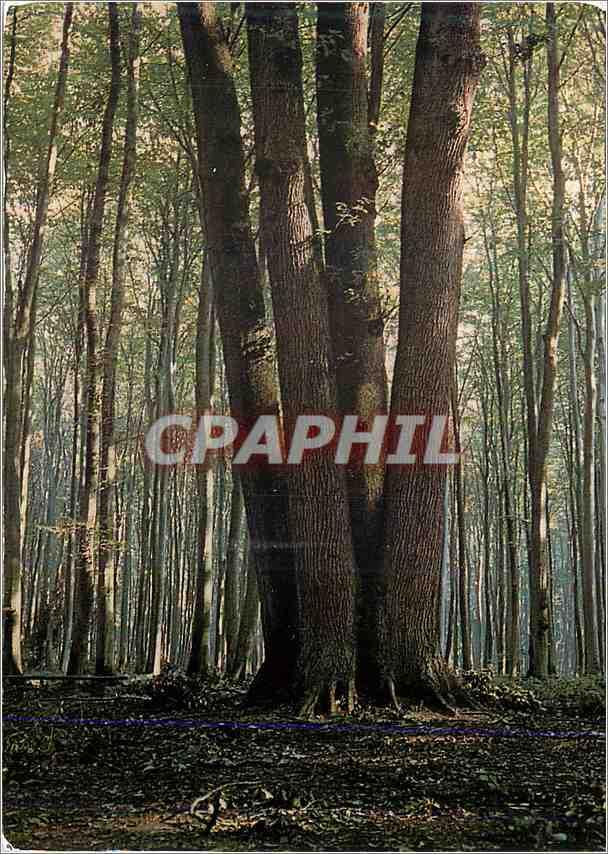 Ansichtskarte AK En foret de Lyons Un bel arbre a quatre troncs 0