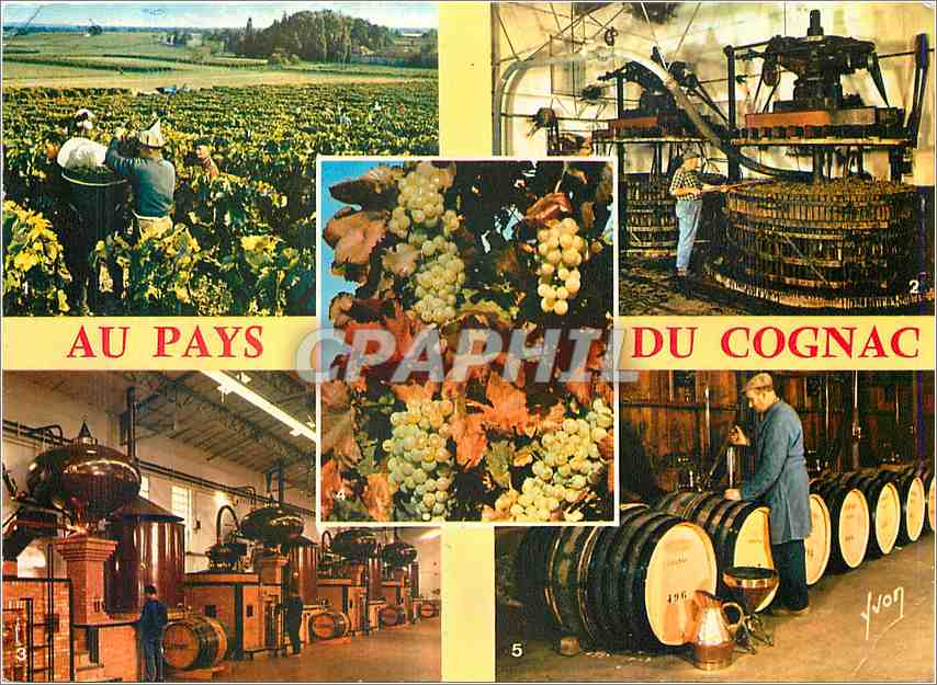 Moderne Karte Cognac Charente Vendanges aux ets Hennessy 0