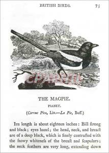 Moderne Karte Thomas Bewick Woodcut from British Birds Land Birds Victoria and Albert Museum