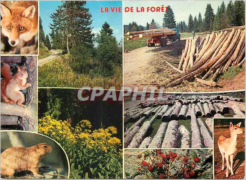 Moderne Karte La vie de la foret Renard Chevreuil Ecureuil 0