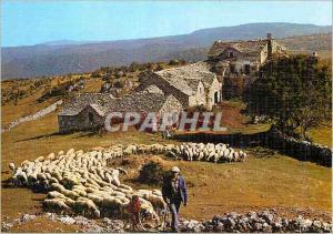 Moderne Karte Depart pour le paturage Moutons