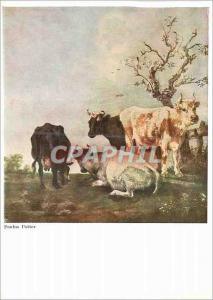 Moderne Karte Zurich Paulus Potter Vaches au Paturage (Kassel) Walter Classen Kunstverlag