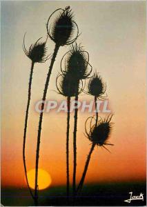 Moderne Karte Fleurs des Champs au Soleil Couchant Couleurs de Bretagne