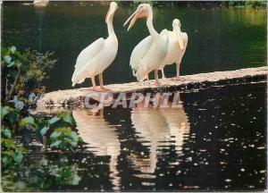Moderne Karte Palicans Jurong Bird Park