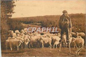Ansichtskarte AK Les Landes de Gascogne Berger Landass et son Troupeau