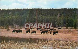 Moderne Karte Yellowstone National Park Head of Bison (Buffalo)