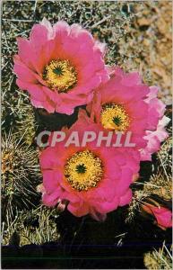 Moderne Karte Hedgehog Cactus of the Arizona Desert