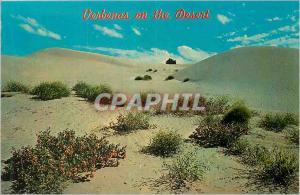 Moderne Karte Verbenas on the Desert
