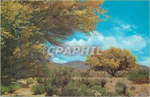 Moderne Karte Palo Verde in Bloom