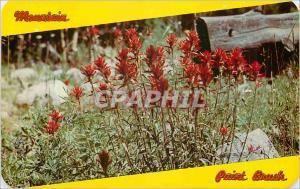 Ansichtskarte AK Indian Paint Brush Flower of Mountain and Plain State Flower of Wyoming