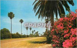 Ansichtskarte AK Greetings from The Lower Rio Grande Valley of Texas The Land of Palms et Flowers