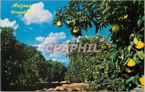 Ansichtskarte AK Arizona Desetrt Grapefruit