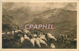 Ansichtskarte AK Les Pyrenees Paturage au col d'Aubisque Vaches Moutons