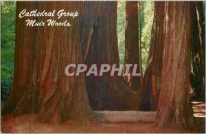 Moderne Karte Muir Woods in the California Redwoods