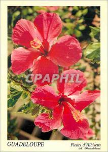 Moderne Karte Guadeloupe Fleurs d'Hibiscus