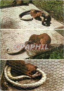 Moderne Karte Martinique Combat de Mangouste et Serpent