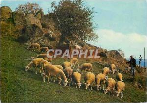 Moderne Karte Paturage en Montagne Berger Moutons