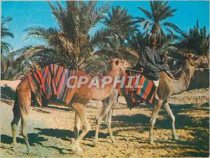 Moderne Karte Sahara Marche dans l'Oasis