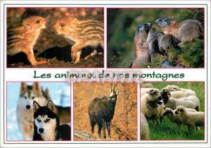 Moderne Karte Les animaux de nos montagnes Marcassins Marottes Huskys Chamois Brebis