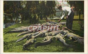 Moderne Karte Alligator Farm Hollenbeck Park Los Angeles Crocodile