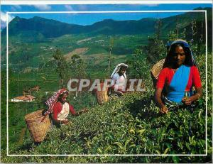 Moderne Karte Sri Lanka (Ceylon) Tea Plantation with tea Pluckers