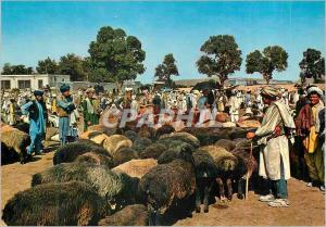 Moderne Karte Stockyard Kaboul Bergers Moutons