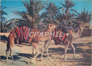 Moderne Karte Sahara Couleurs et Lumieres d'Algerie Marche dans l'Oasis Chameaux