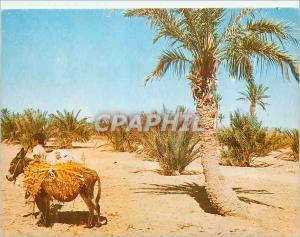 Moderne Karte Sahara Paysage Pittoresque Ane Donkey