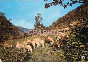 Moderne Karte En Parcourant l'Ariege Scene Paisible dans un Paturage Moutons