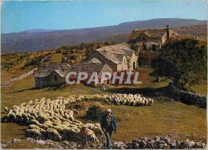 Moderne Karte Depart pour le Paturage Berger Moutons