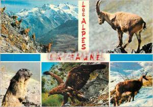 Moderne Karte Les Alpes Pittoresques La Faune Aigle Chamois Isard