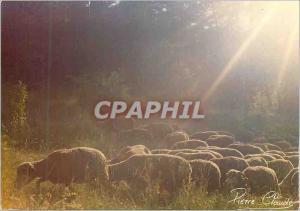 Moderne Karte Paturage Images de Chez nous Moutons Bergere