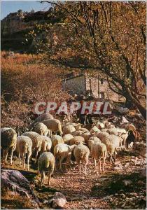 Moderne Karte Les Belles Images de Provence Moutons au Printemps