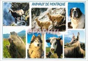Moderne Karte Animaux de Montagne Chien Husky Vache Isard Chamois