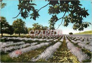 Moderne Karte Les Belles Images de Provence Champ de Lavande en Provence