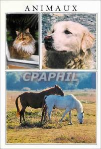 Moderne Karte Animaux Chien Chat Cheval