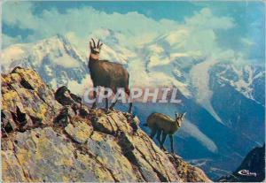 Moderne Karte Animaux de Montagne Chamois