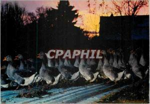 Moderne Karte En Perigord l'Elevage des Oies