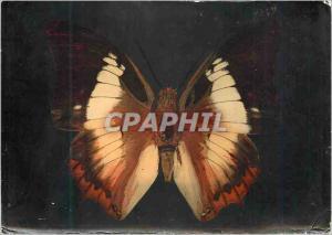 Moderne Karte Papillon Publicite Defebryl