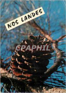 Moderne Karte Visages des Landes Pomme de Pin  au Dos des grands Pins Verts Posant ses Teintes Chaudes