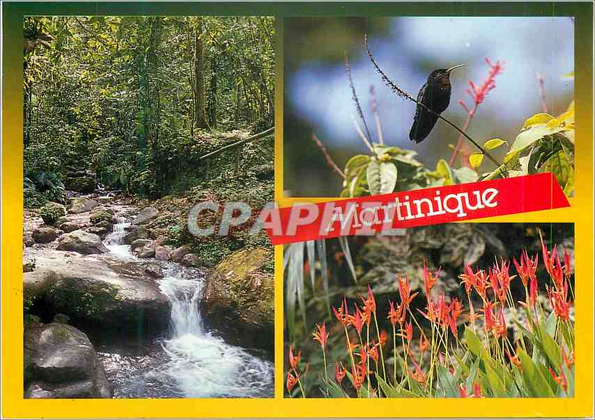 Moderne Karte Martinique Nature Tropicale le Colibri 0