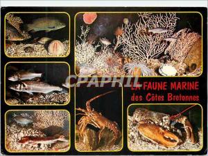 Moderne Karte Couleurs de Bretagne Poissons et Crustaces de nos Cotes Vieille Bar