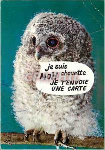 Moderne Karte La Chouette Animaux Humoristiques