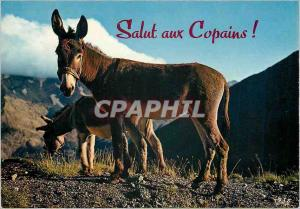 Moderne Karte Salut aux Copains (Anes) Donkey Ane